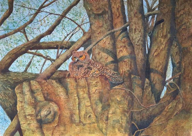 Gibbons Owlet