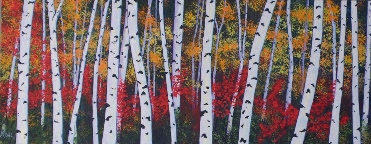 Birch & Red Maples