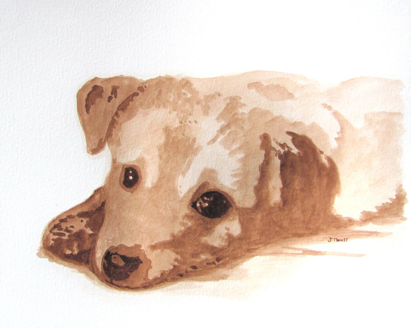 Golden Lab Puppy