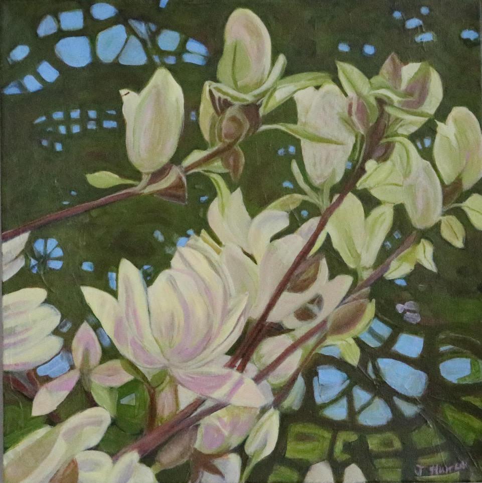 Springbank Magnolia #2