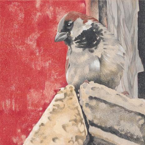 Novack's Sparrow