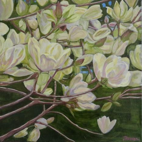 Springbank Magnolia #1