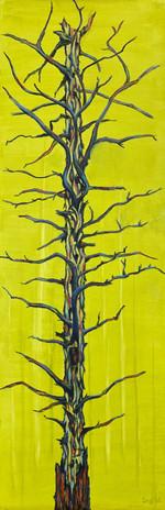 Mother Tree V