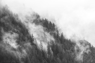 Cloud Forest 1 B&W