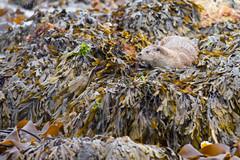 River Otter 9