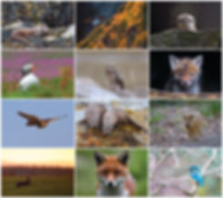 BRITISH WILDLIFE 2019 THUMBNAILS copy.jp