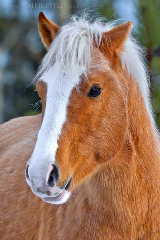 Wild Brown Stallion