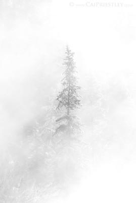 Mist Tree B&W