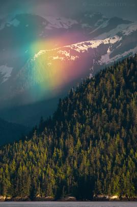 Rainforest Rainbow