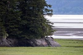 Coastal Wolf Habitat