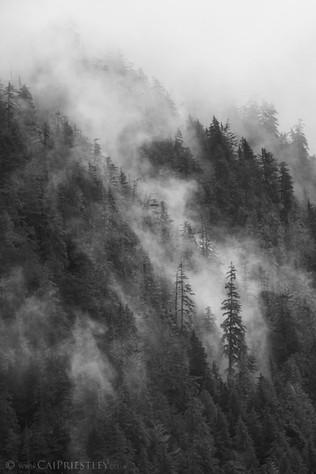 Cloud Forest 2 B&W