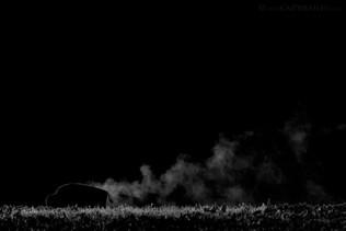 Steaming Bison B&W