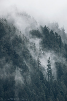 Cloud Forest 3