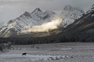 Cow Moose Scenic