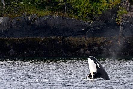 ORCA SPYHOP NEWER.jpg