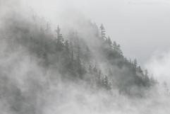 Cloud Forest 1