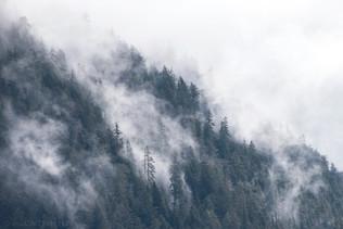 Cloud Forest 2