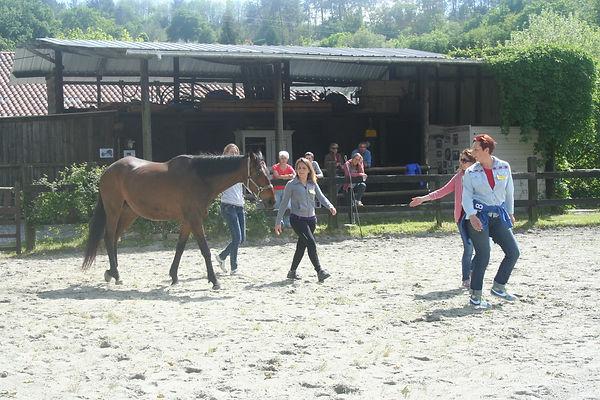 Travail de cohésion avec le cheval