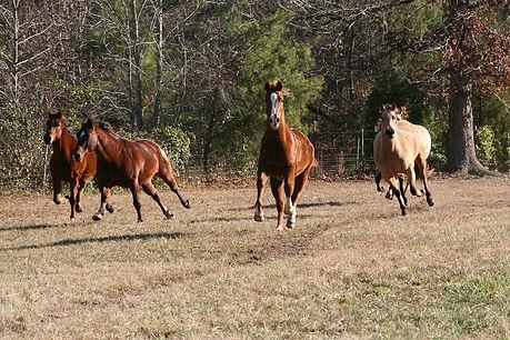 horses-5079962_1280.jpg