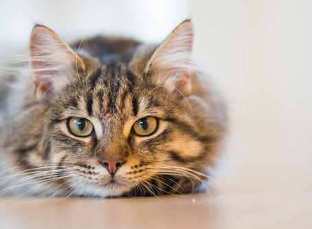 So your cat has FeLV, now what?