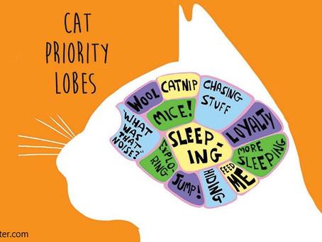 Is a cat brain like a human brain?