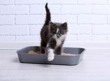 Choosing the Right Cat Litter- It Will Make All the Difference for You and for Your Cat