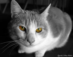 Yellow Eyes Cheerio