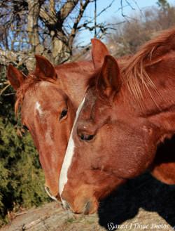 Cowboy & Jay-jay