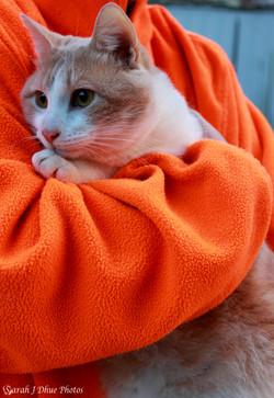 Color on Color Orange: Cheerio
