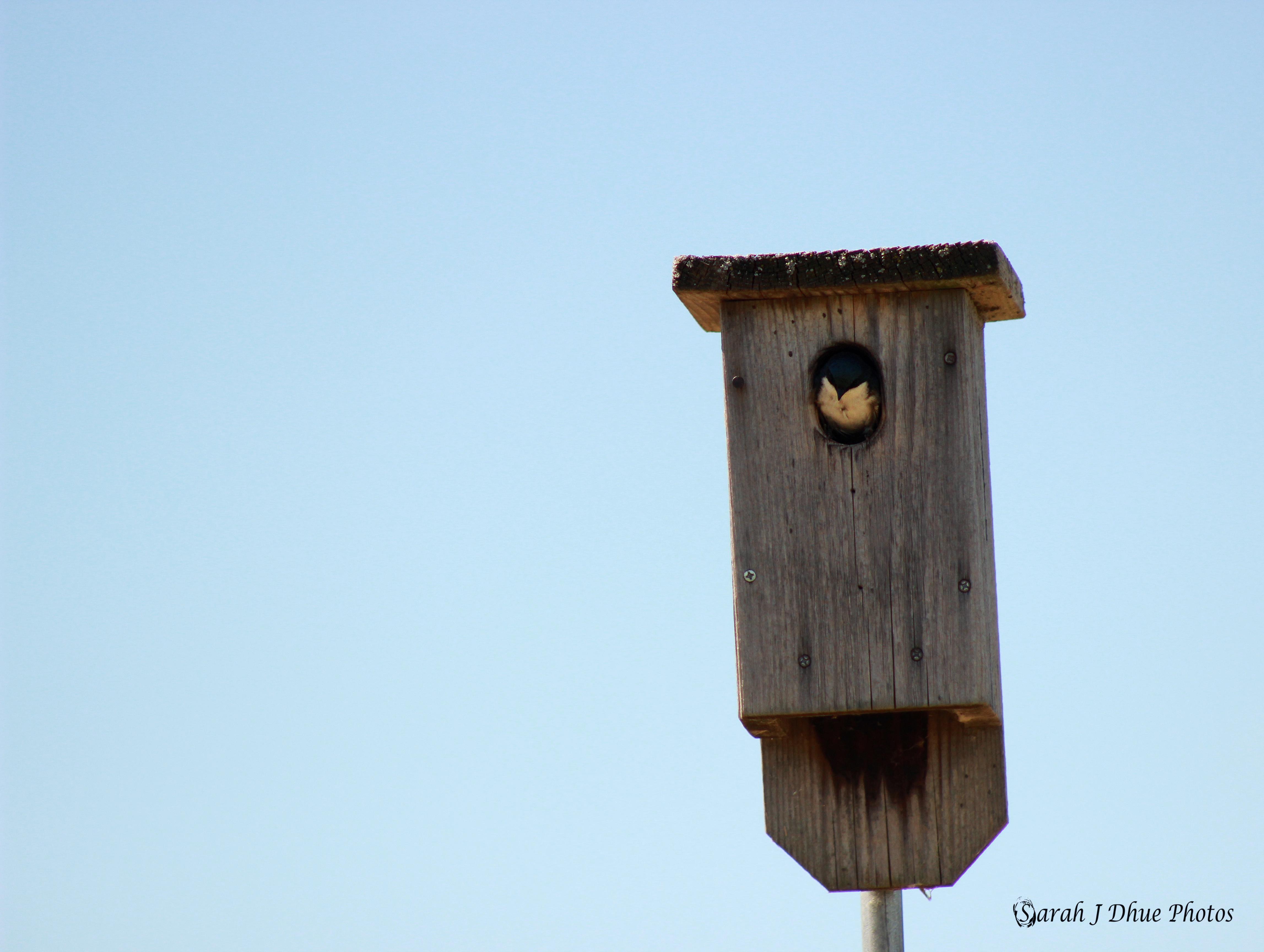 Bird's Abode