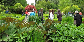 S'Klallam Heronswood plant sale