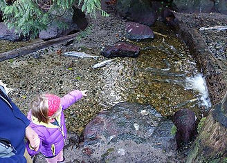 Child sees fish at Cowling Creek