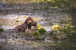 Nordais Waterfowl Fille à Papa JH