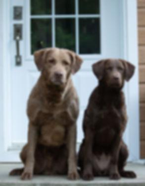 Stanley et Juno.jpg
