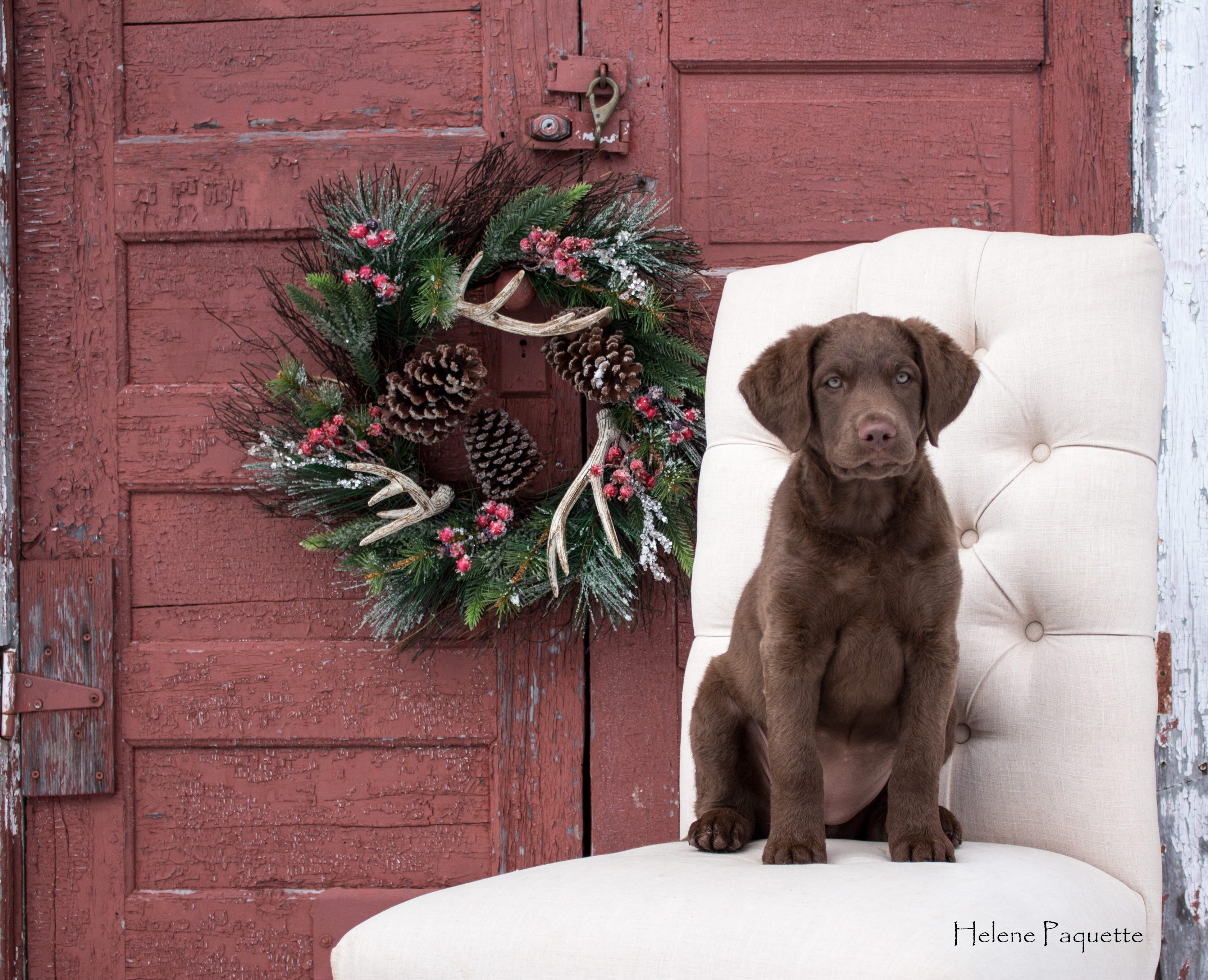 Juno bébé Noël