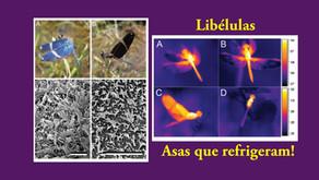 Libélulas que controlam seu calor corporal com as asas.