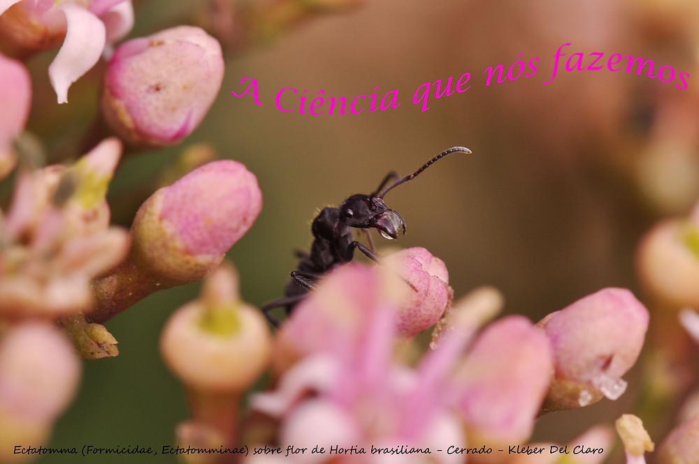 Formiga coletando néctar em flor
