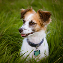 Freddie - Pet Photography