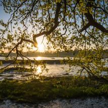Sunrise at the River Deben - Landscapes