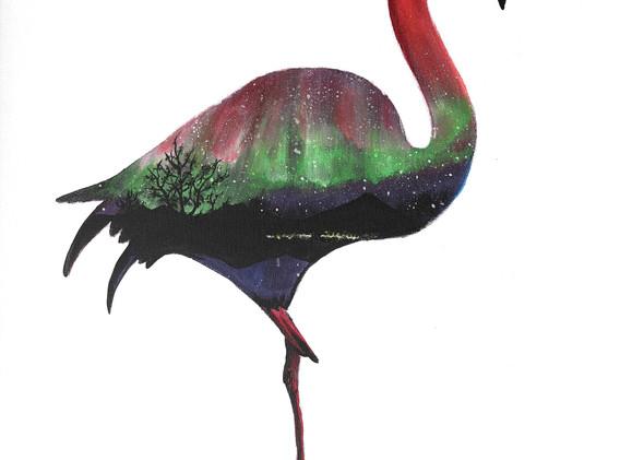 Leon Lollipop - Aurora Flamingo(60cm x 5
