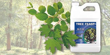 TreeFeast_LifeShot_Web.jpg