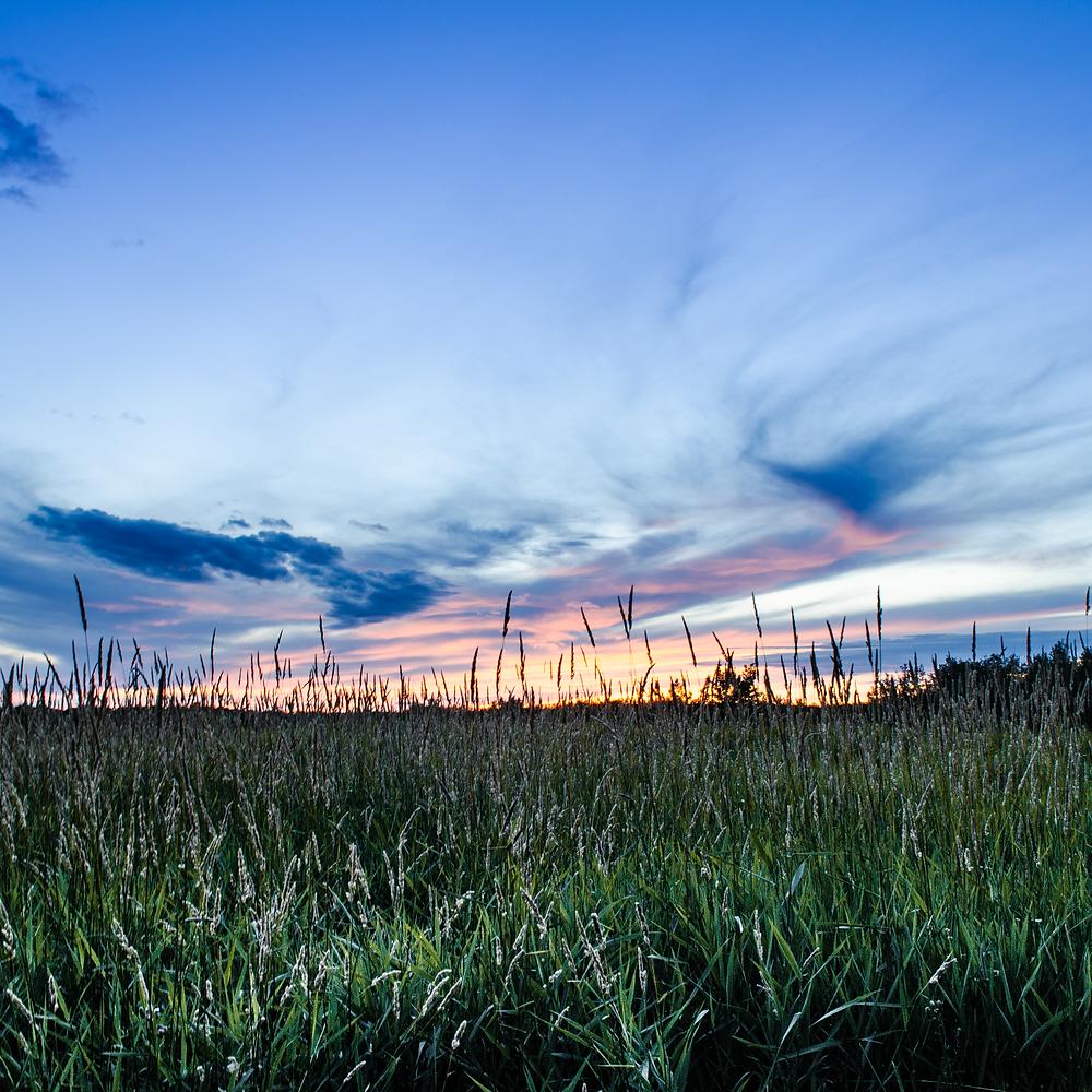 Sunset over grass field in prairies