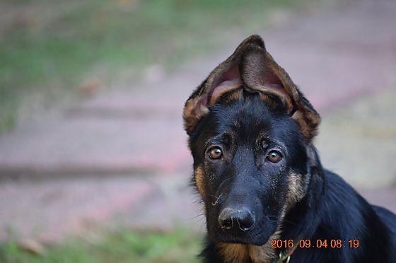 NEGSD-Pup.jpg
