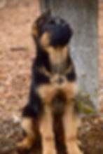 NEGSD-Pup-2.jpg