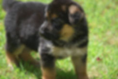 NEGSD-Pup-3.jpg