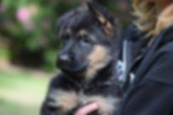 NEGSD-Pup-4.jpg