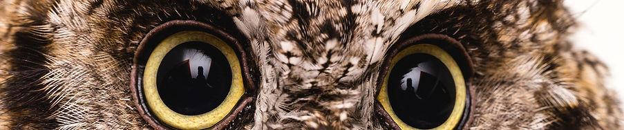 OwlEyes2.jpg