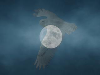 The Snowy Owl Moon