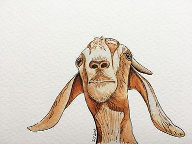 GoatEditTexture.jpg