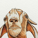 GoatEditTextureCrop1.jpg